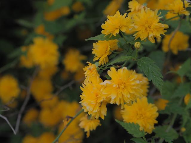 jaro květiny